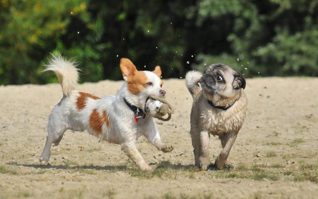 SPD will Hundewiese für Haltern am See